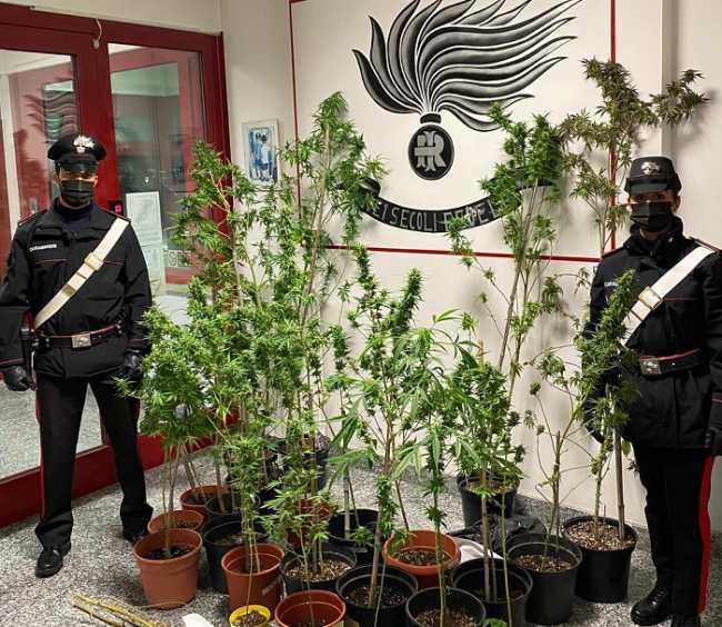 carabineiri piante marijuana