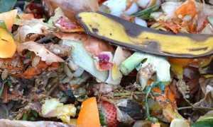cibo rifiuti